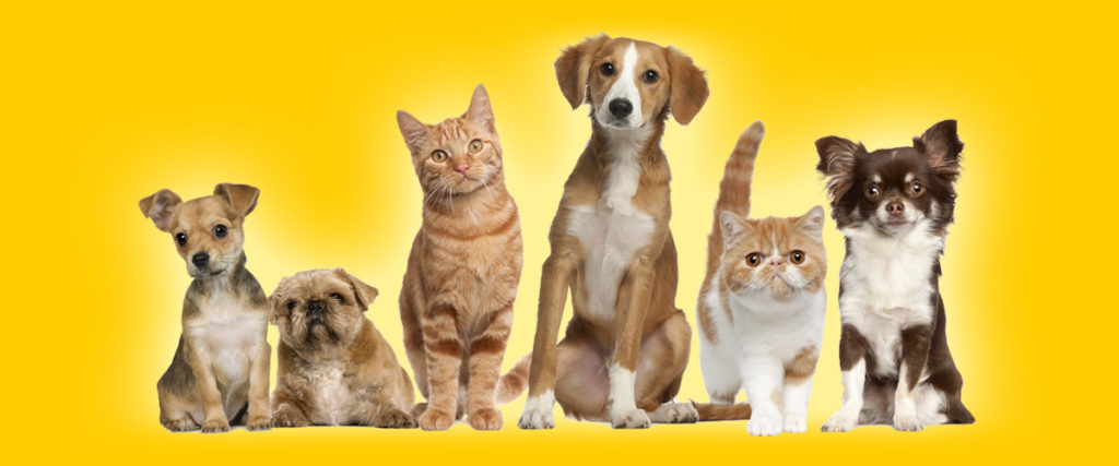 Dogs of all sizes and cats can be boarded or pet sat