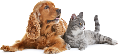 Dogs and cats can be boarded or attended to